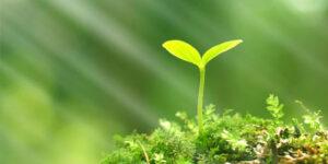 Український День навколишнього середовища (День довкілля)