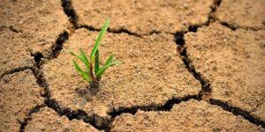 Всесвітній день боротьби з опустелюванням і засухою