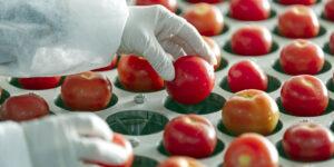 День працівників харчової промисловості